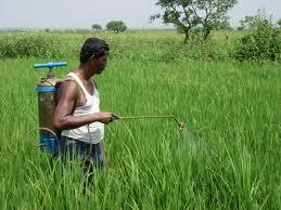 Обнаружена взаимосвязь между сельскохозяйстенными пестицидами и аутизмом
