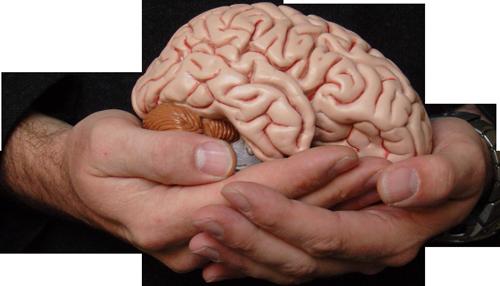 мозг, кислотность
