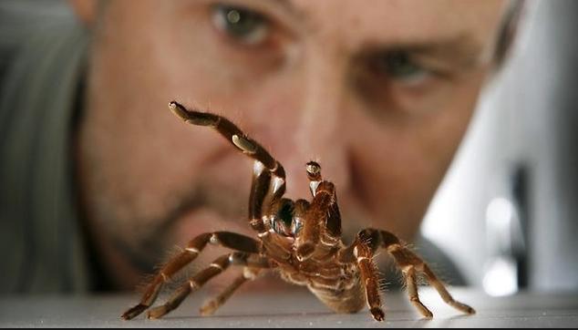 Яд паука может помочь людям с хроническими болями