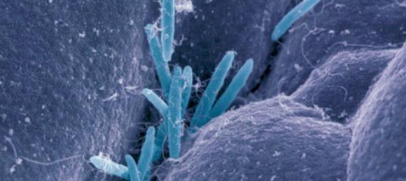 Кишечные бактерии младенцев связаны с пищевой сенсибилизацией