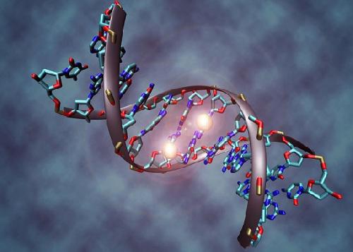 ДНК бактерий могут передаваться от матери к потомству