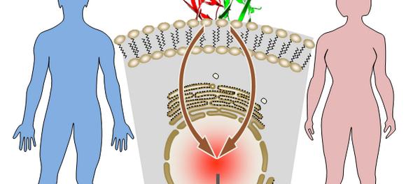 Выявлена взаимосвязь между раком предстательной и молочной желез