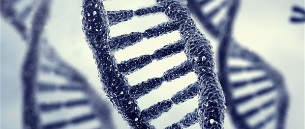 Не все гены мы получили от наших предков, некоторые из них принадлежат другим видам