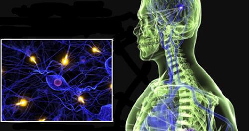 Ученые разработали препарат для лечения рассеянного склероза