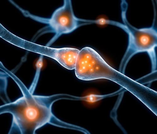 эволюция, интеллект, болезнь Альцгеймера