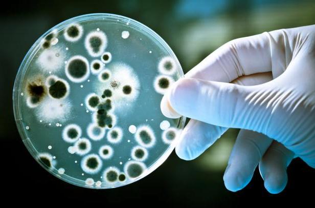 антибиотики, бактерии