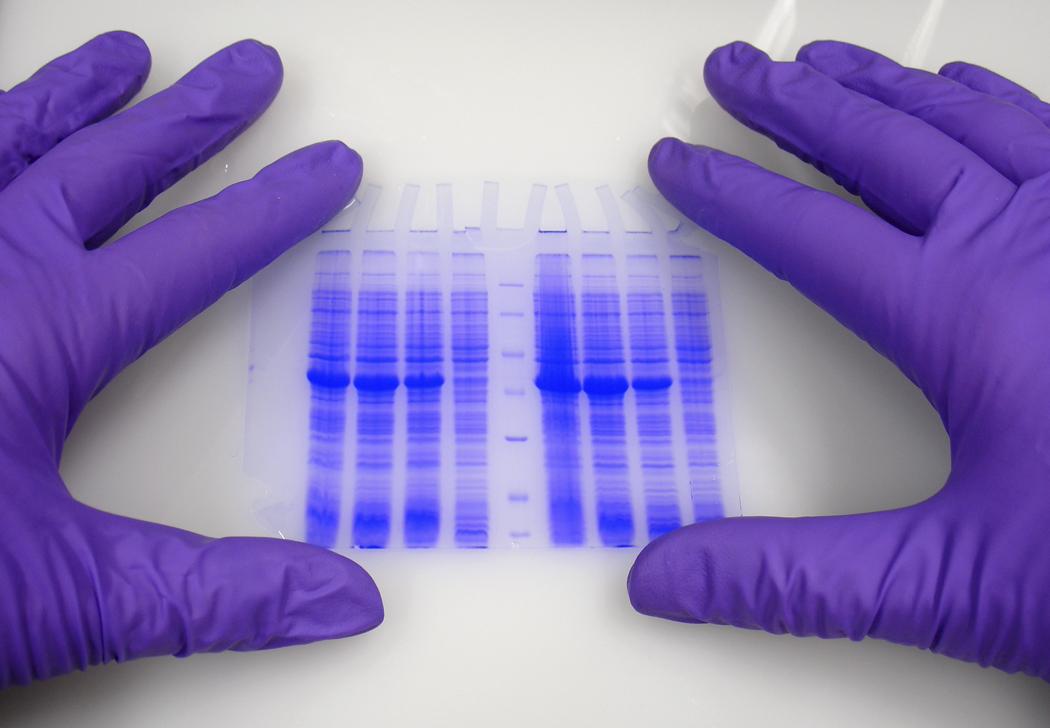 генетическая регистрация, правонарушения