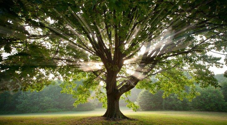 здоровье, деревья