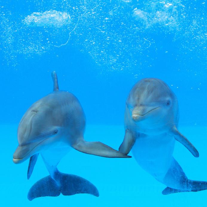 Дельфины, сахарный диабет