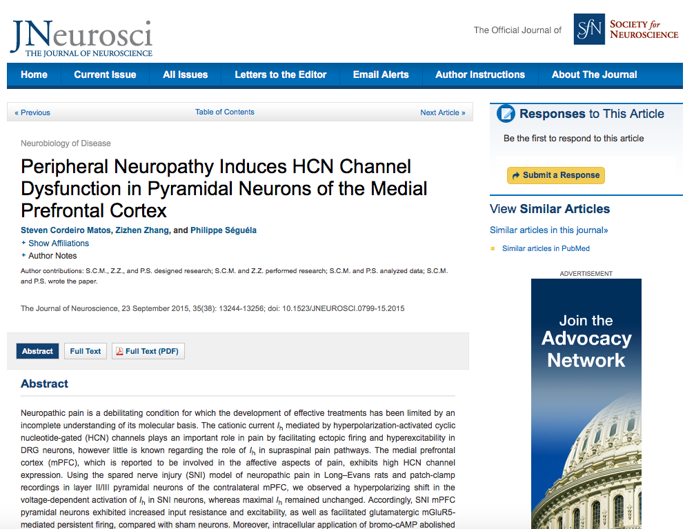 Steven Cordeiro Matos et al. Peripheral Neuropathy Induces HCN Channel Dysfunction in Pyramidal Neurons of the Medial Prefrontal Cortex // The Journal of Neuroscience - 2015 - vol. 35 (38)