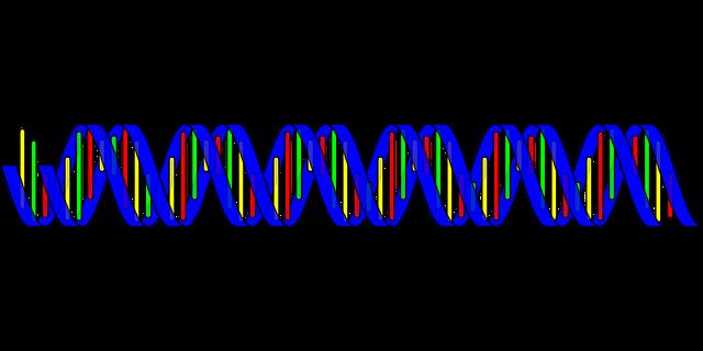 заболевания периферических артерий, атросклероз, ген, полиморфиз генов