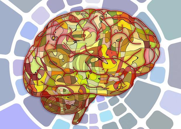 ген, головной мозг, NeuroD1