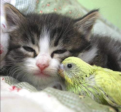 бессонница, домашние животные, сон
