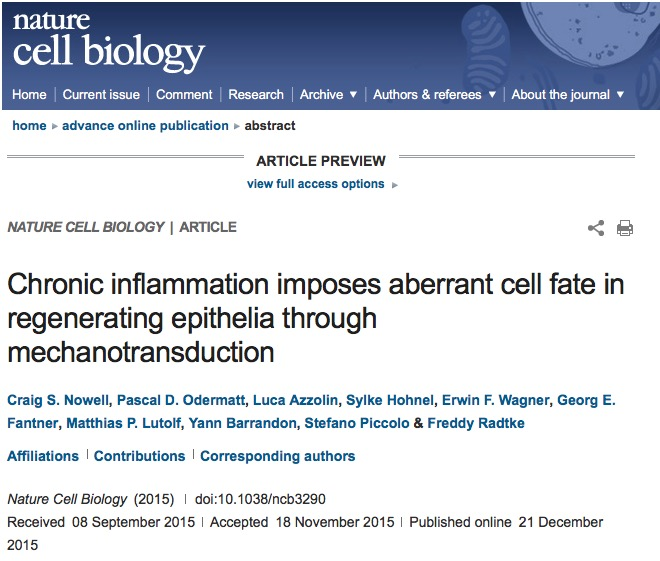 Nowell, Craig S.; Odermatt, Pascal D.; Azzolin, Luca; Hohnel, Sylke; Wagner, Erwin F. et al. (2015) Chronic inflammation imposes aberrant cell fate in regenerating epithelia through mechanotransduction // Nature