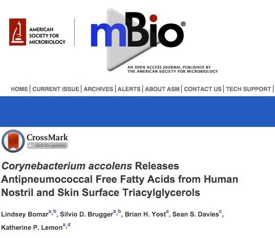 Corynebacterium accolens, Streptococcus pneumoniae, бакетрии, mBio