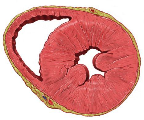 Сердце, артериальное давление, Nature Communications