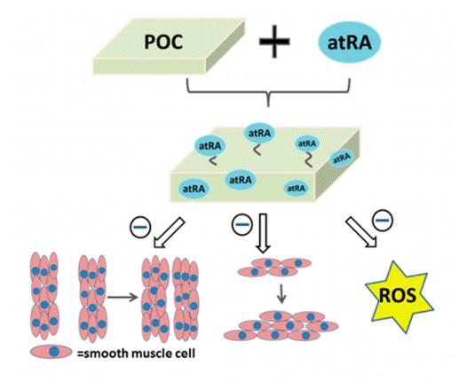 рубцевание, витамин А, ACS Biomaterials Science & Engineering