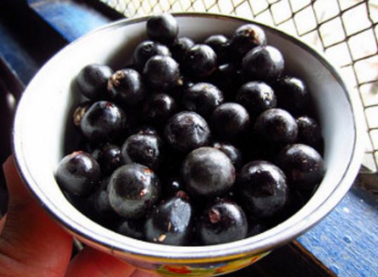 ягода, асаи, Диетология