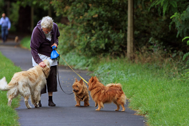 собаки, The Gerontologist, пожилые люди