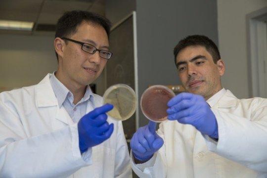 глистные инвазии, паразиты, воспалительные заболевания кишечника, Science