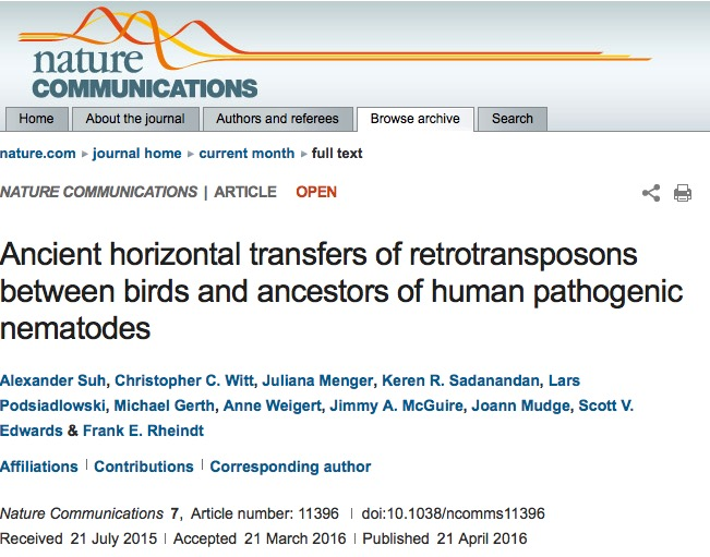 ген, птицы, паразиты, нематоды, Nature Communications