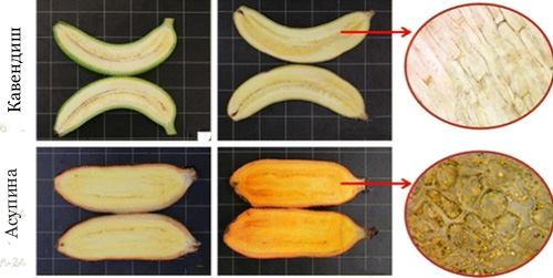 бананы, слепота, Journal of agricultural and food chemistry, витамин А