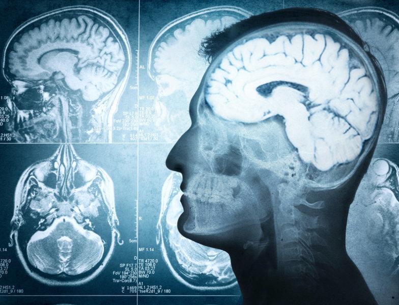 головной мозг, таламус, eLife