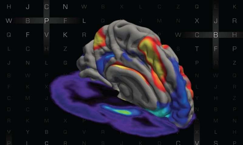 оперативная память, дофамин, Science Advances