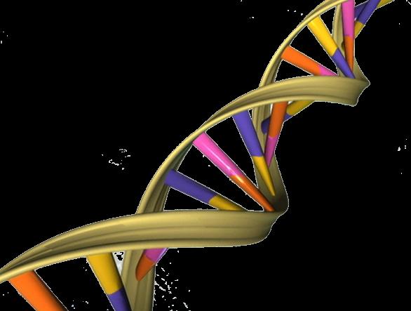 генетические заболевания, мутация, атаксию глазодвигательной апраксии типа 1