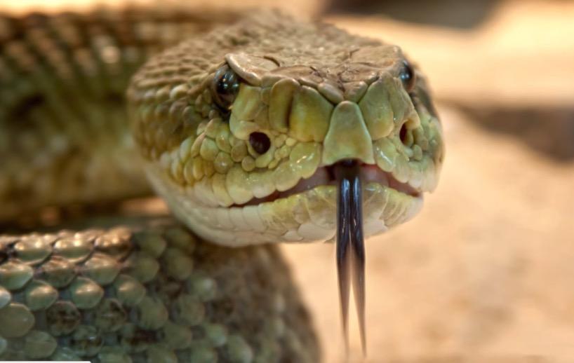 пауки, страх, змеи