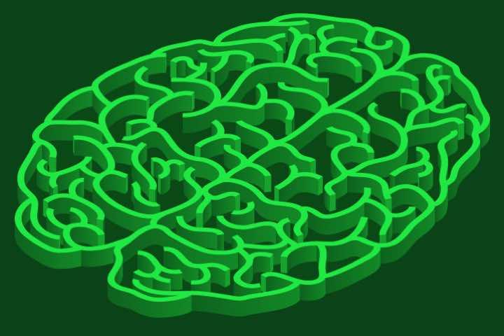 картинки мозг лабиринте красочные видео