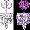 кишечник, нейроны мозг