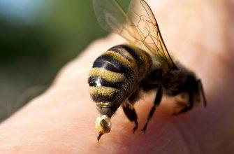 пчела, яд